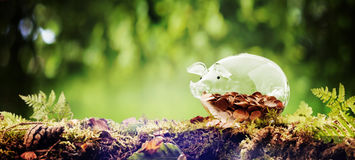 Panorama banner of a piggy bank in nature Stock Photography