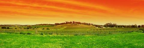panorama- barossa Arkivfoton