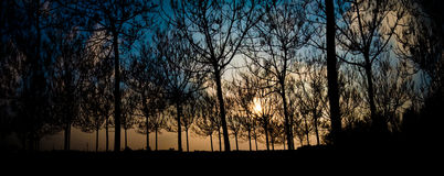 Panorama-Baum-Sonnenuntergang Stockfoto
