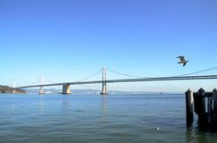 Panorama of Bay Bridge in San Francisco, California. A seagull flying past the San Francisco Bay and Bay Bridge on a sunny day Royalty Free Stock Photography