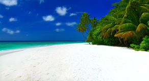Panorama of beach. Panorama of beautiful tropical beach with white sand, palm trees, blue sky and white clouds on Maldives Royalty Free Stock Photo