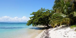 Panorama on a beach with beautiful vegetation Royalty Free Stock Images
