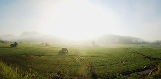 Panorama Bean Fields Imagem de Stock Royalty Free