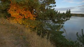 Panorama of a forest in autumn footage stock footage