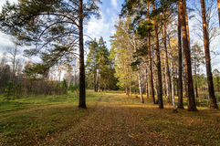 Panorama of beautiful autumn landscape in a forest with a lake, Russia, Ural Royalty Free Stock Images