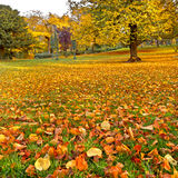 Panorama. Beautiful autumn park. Autumn. Royalty Free Stock Photography