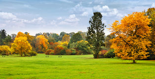 Panorama. Beautiful autumn trees. Autumn. Stock Photography