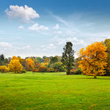 Panorama. Beautiful autumn trees. Autumn. Royalty Free Stock Images