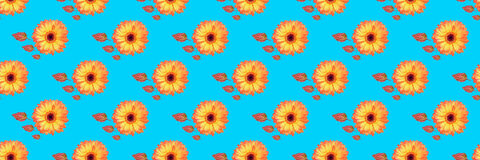 Panorama of beautiful gerbera flowers and vibrant leaves backgro Royalty Free Stock Images