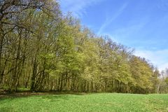 Panorama beautiful green forest in springtime. Royalty Free Stock Photo