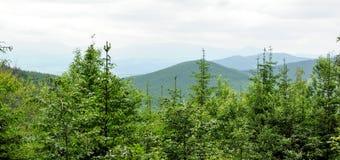 Panorama of Beautiful Mountain forest Stock Photos