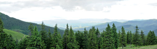 Panorama of Beautiful Mountain forest Stock Photography