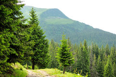 Panorama of Beautiful Mountain forest Stock Image