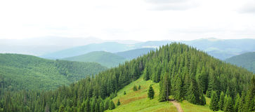 Panorama of Beautiful Mountain forest Royalty Free Stock Image
