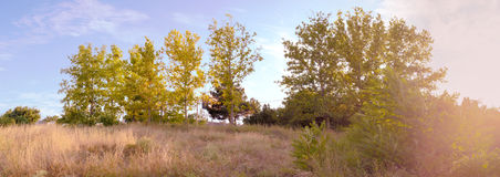 Panorama of Beautiful summer field Royalty Free Stock Images