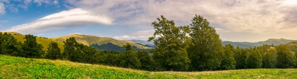 Panorama of a beautiful summer landscape. Ancient beech forest on the grassy meadow and mountain ridge in the distance under the gorgeous evening sky Stock Images