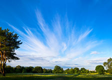 Panorama of beautiful summer meadow Stock Photo