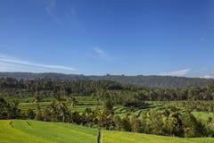 Panorama of beautiful terraced rice field on Bali Indonesia. Sumny Panorama of beautiful terraced rice field on Bali Indonesia royalty free stock photo