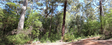 Panorama of Beedelup National Park West Aust Stock Images