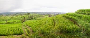 Panoramat av Jatiluwih rice sätter in terrasser, Bali Royaltyfria Bilder