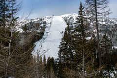 Panorama of big ski slope oh high mountain surrounded by spruces Stock Photography