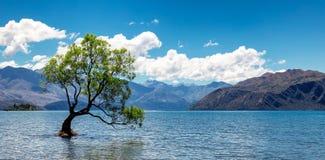 Panorama- bild av det ensamma trädet i sjön i Wanaka royaltyfri foto