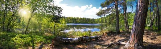 Panorama- bild av skogen med sjön Arkivbilder