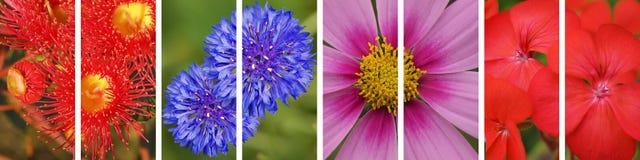 Panorama- blom- blommabaner Royaltyfria Bilder