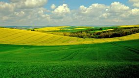 Panorama of blooming fields in South Moravia, stock video