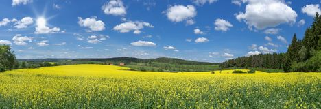 Panorama - Blooming rapeseed field in the sunshine stock photos
