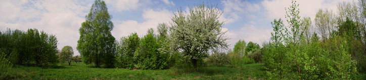 Panorama of a blossoming garden in village Royalty Free Stock Photo