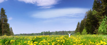 Panorama of a blossoming meadow. The girl among blossoming dandelions Stock Photography