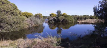Panorama of  blue lake in Big Swamp Bunbury Western Australia in spring. Royalty Free Stock Photo