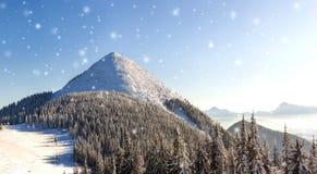 Panorama bonito do inverno com neve de queda fresca Sagacidade da paisagem Imagem de Stock Royalty Free