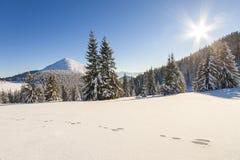 Panorama bonito do inverno com neve fresca Paisagem com abeto vermelho Imagem de Stock Royalty Free