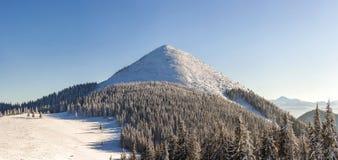 Panorama bonito do inverno com neve fresca Paisagem com abeto vermelho Fotos de Stock