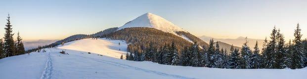 Panorama bonito do inverno Paisagem com os pinheiros spruce, azuis fotografia de stock royalty free