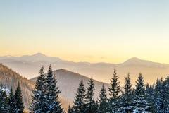 Panorama bonito do inverno Paisagem com os pinheiros spruce, azuis Fotos de Stock Royalty Free
