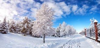 Panorama bonito do parque do inverno Fotos de Stock