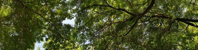 panorama bosloofbomen camping stock afbeelding
