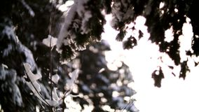 Panorama through the branches of trees in the winter forest. Sunset stock video