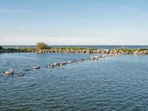 Panorama of breakwaters and birds on artificial island De Kreupel in lake IJsselmeer, Netherlands. Panorama of breakwaters and resting birds on artificial island royalty free stock photography