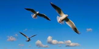 Panorama brillante del cielo con las gaviotas Fotos de archivo