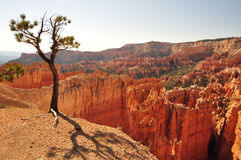 Bryce Canyon tree Stock Photos