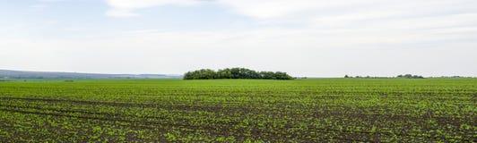 Panorama- buske i mitt av fältet arkivfoton