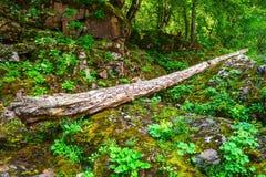 Panorama cênico do arvoredo verde da floresta no verão Imagem de Stock