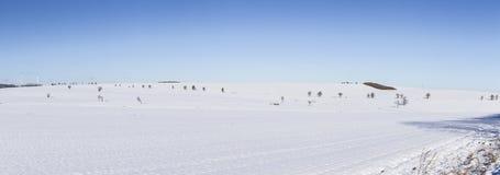 Panorama cênico do inverno com árvores Imagens de Stock Royalty Free