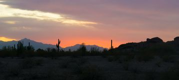 Panorma sillhuette view of cactus at sunset in arizona phoneix desert stock photography