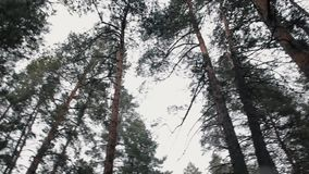 General plan. Trees. Buzulukskiy Bor. Forest. Panorama. The camera moves from left to right stock footage