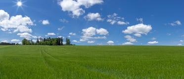 Panorama - campo grande con la cebada joven Imagenes de archivo